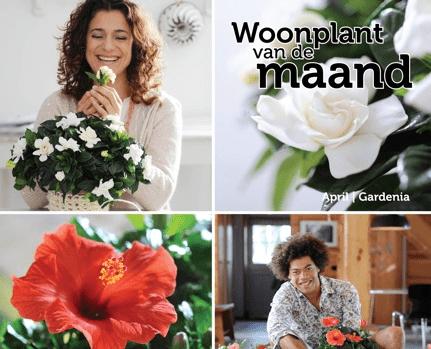 Bloemen bureau Holland