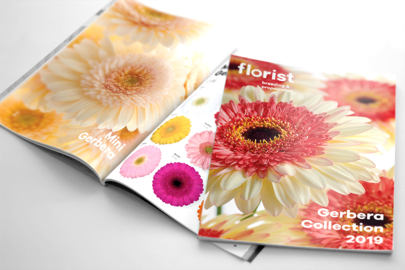 Gerbera collection hilverda florist