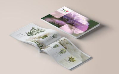 Alstroemeria Brochure